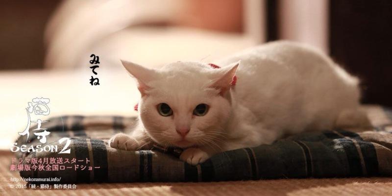 貓侍2-6.jpg