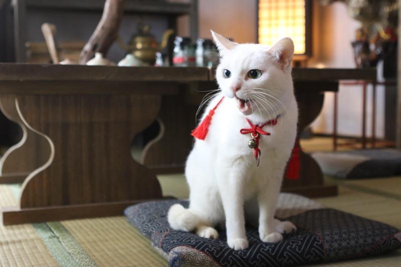 貓侍2-7.jpg