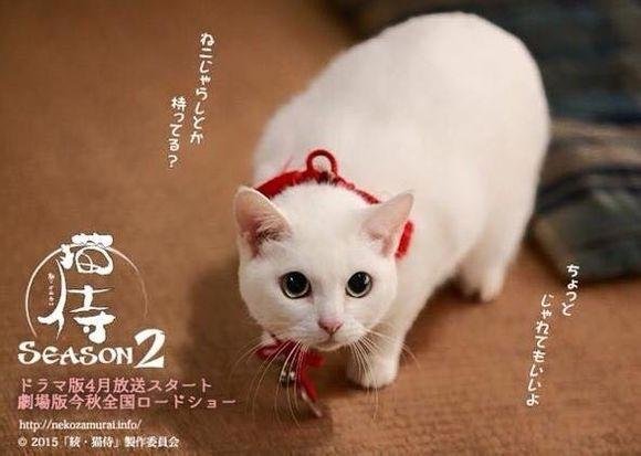 貓侍2-11.jpg