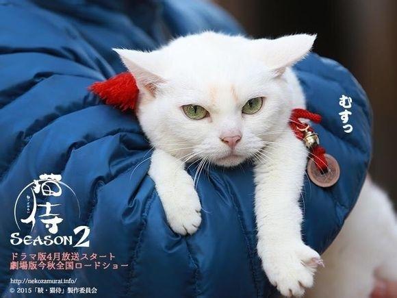 貓侍2-12.jpg