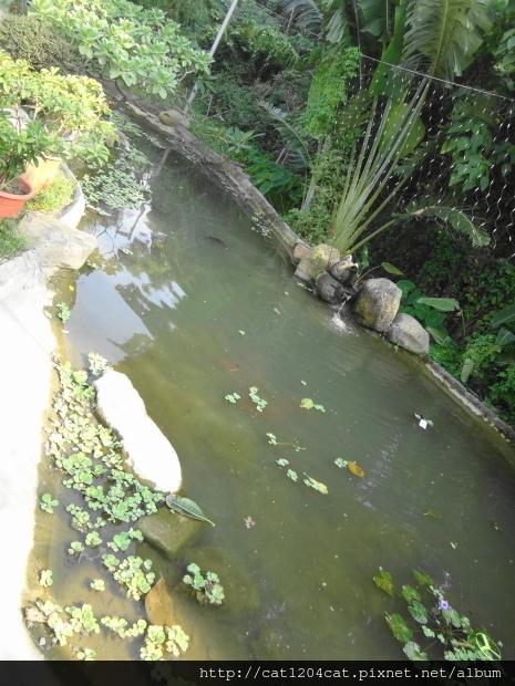 綠樹林-環境16.JPG