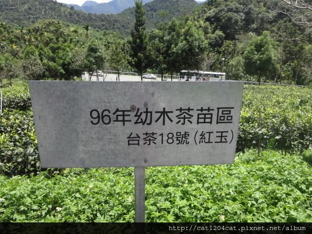 日月老茶廠2.JPG