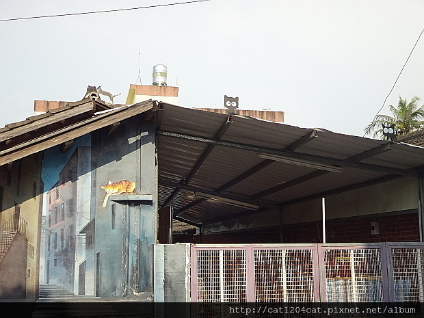 屋頂上的貓10.JPG