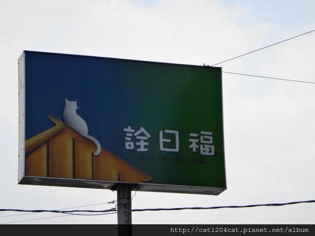 屋頂上的貓23.JPG