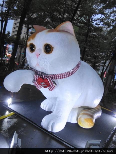 大萌貓2.JPG