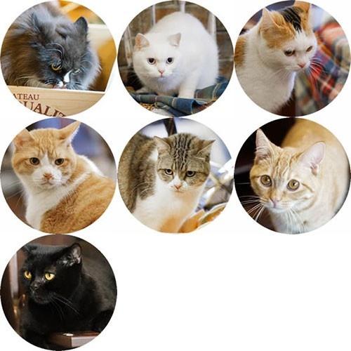 毛毯貓2.jpg