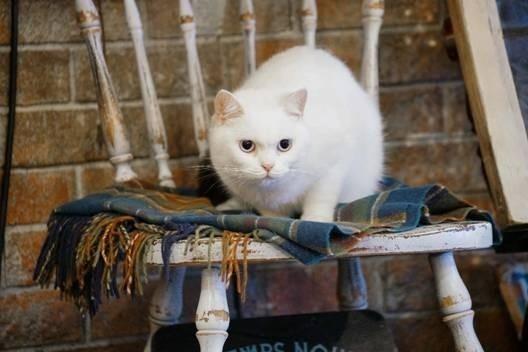 毛毯貓8.jpg