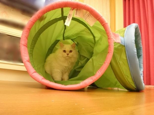 奶茶+貓隧道3.JPG