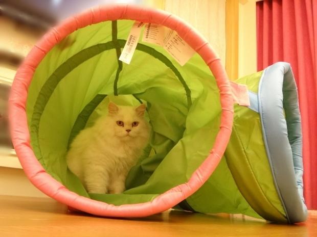 奶茶+貓隧道4.JPG