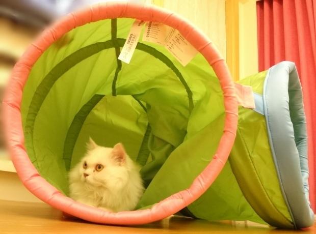 奶茶+貓隧道5.JPG