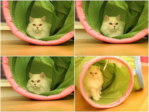 奶茶+貓隧道12.jpg
