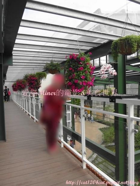 金獅湖蝴蝶園10.JPG