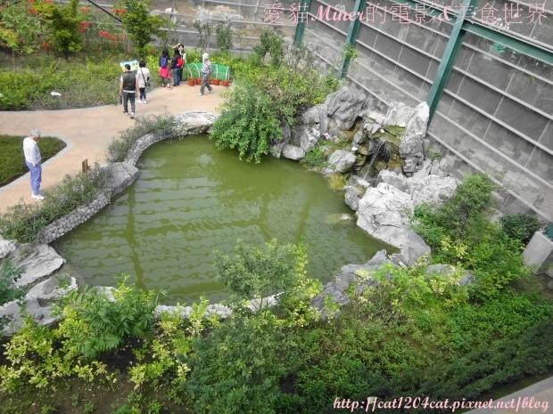 金獅湖蝴蝶園11.JPG