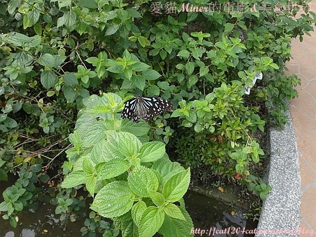 金獅湖蝴蝶園25.JPG
