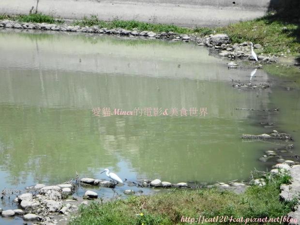 金獅湖3.JPG