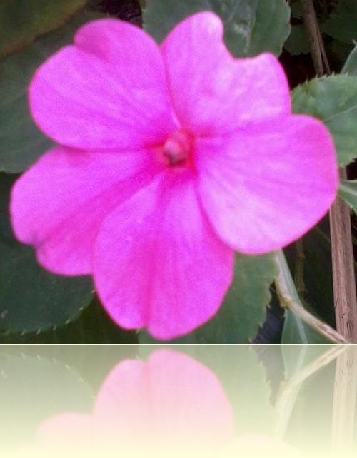 缺角的小紅花