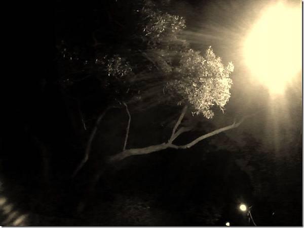 尋找生命的亮光