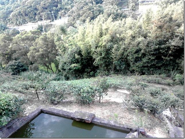 茶園蓄水池19