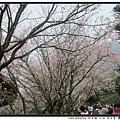 竹子湖 (19)