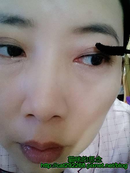 貓咪的思念易珈生技睫毛膏使用時13.jpg
