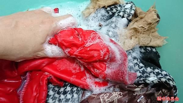 dalli純植物油親膚抗敏洗衣皂DSC_0909.jpg