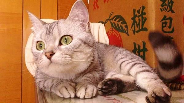 貓妹妹(2)