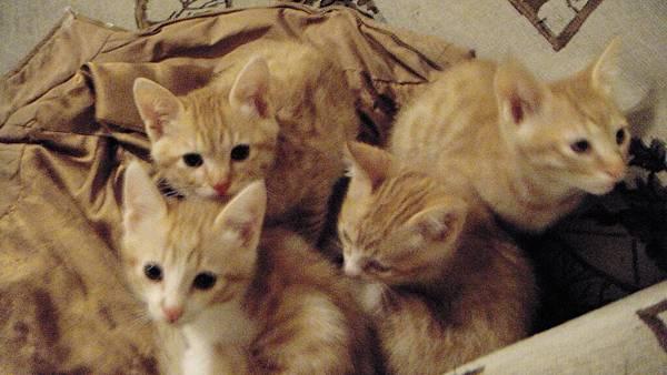 四隻貓合照.JPG