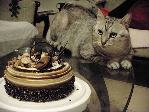 肉包對蛋糕很有興趣.JPG