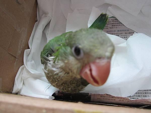 鳥類都不喜歡相機?(還是太過喜歡?)