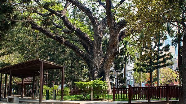 台南北區景點-台南公園