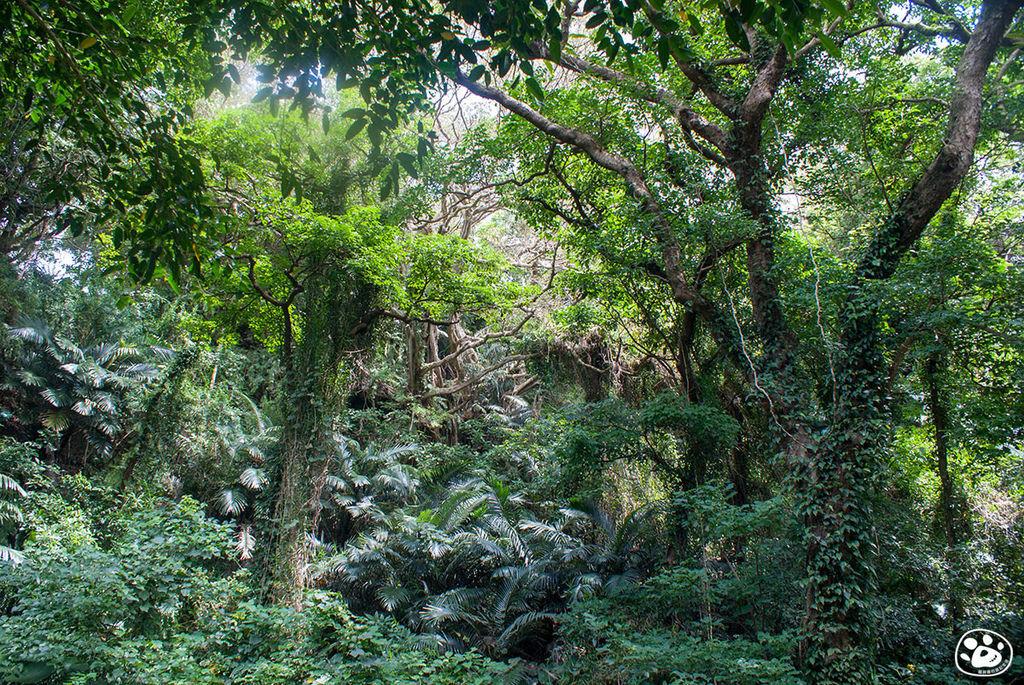 日本沖繩景點-GANGALA之谷 (12).jpg
