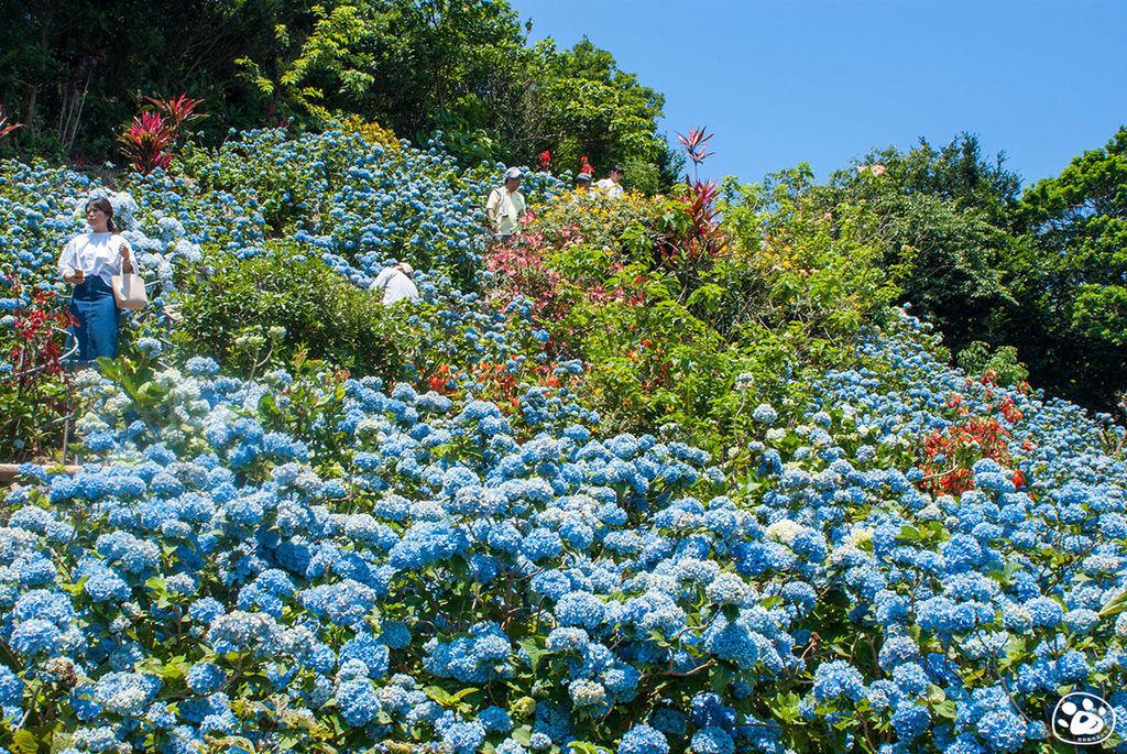 日本沖繩景點-饒平名繡球花園 (7).jpg