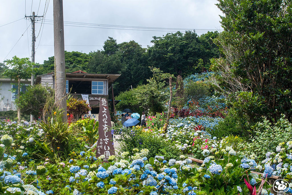 日本沖繩景點-饒平名繡球花園 (17).jpg