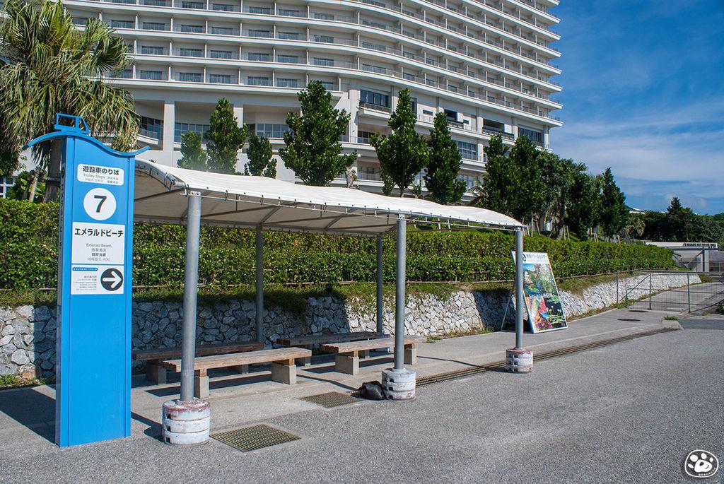 日本沖繩景點美麗海水族館-翡翠海灘 (16).jpg