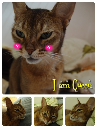 queenmi