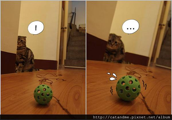 cat&ball