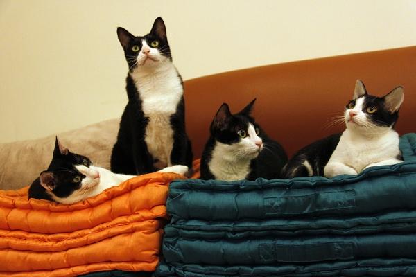 四貓 2 縮.jpg