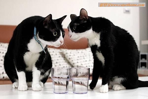 0417 大雙貓預備一起喝.jpg