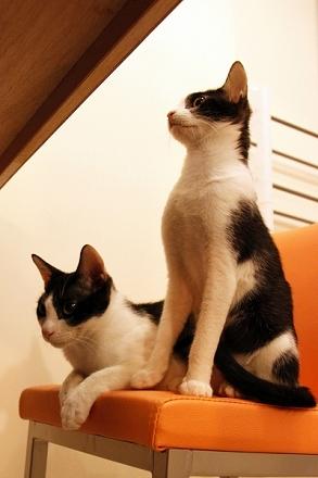 新雙貓2 縮.jpg