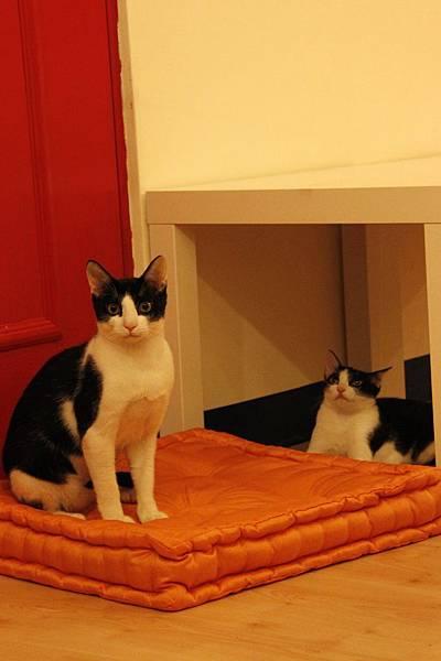 小雙貓1.jpg