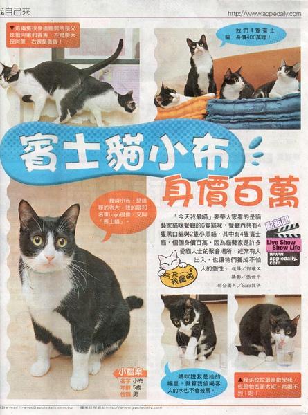 蘋果日報貓藝家報導20110313 2001.jpg