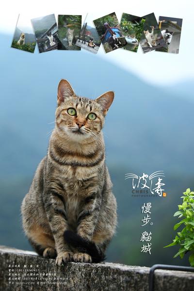 波濤 貓藝家攝影展海報_...jpg