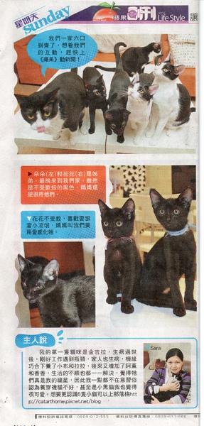 蘋果日報貓藝家報導20110313 1002.jpg