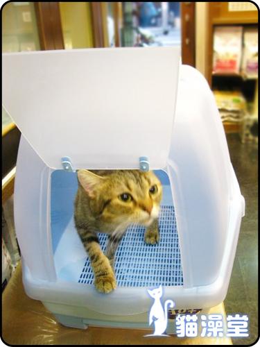 cat0602-14.jpg