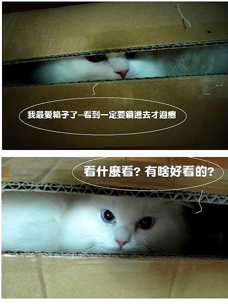 meow3.jpg