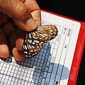 011誰還記得這隻是?蝶.JPG