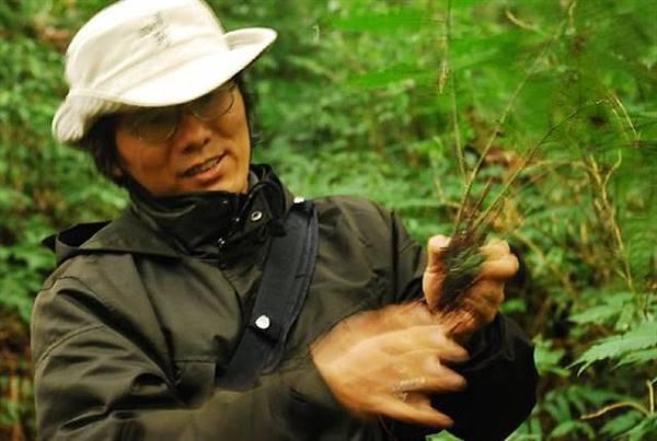 廣葉鋸齒雙蓋蕨 (Small).JPG