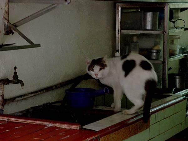 011偷喝水的貓.jpg