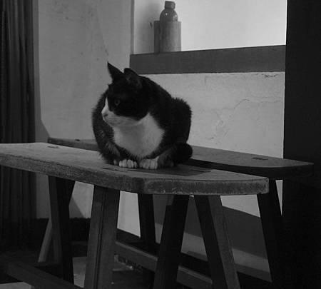 12貓在等你