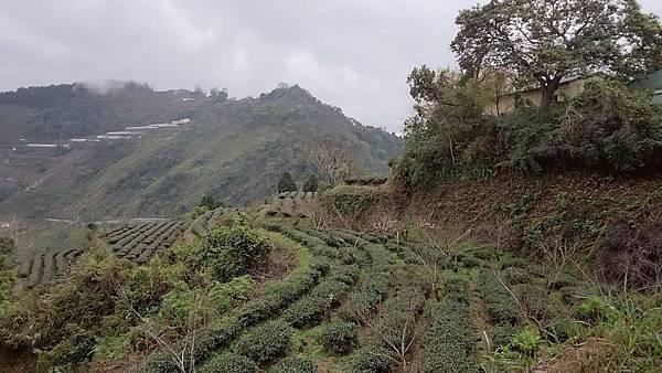 003關頭山農場.jpg
